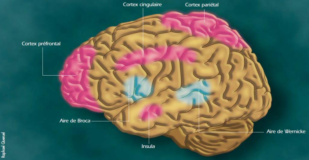 L'activité de certaines aires cérébrales est renforcée par la pratique de la méditation de pleine conscience :<br /> le cortex préfrontal gauche associé aux émotions positives ;<br /> le cortex cingulaire antérieur impliqué dans la perception des sensations corporelles, notamment de la douleur ;<br /> le cortex fronto-pariétal et l'insula, impliquée dans l'intéroception, ou perception des sensations internes.<br /> En revanche, l'activité des aires du langage (aire du Broca et aire de Wernicke) diminue.