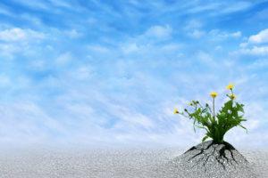 Fleurs perçant le bitume